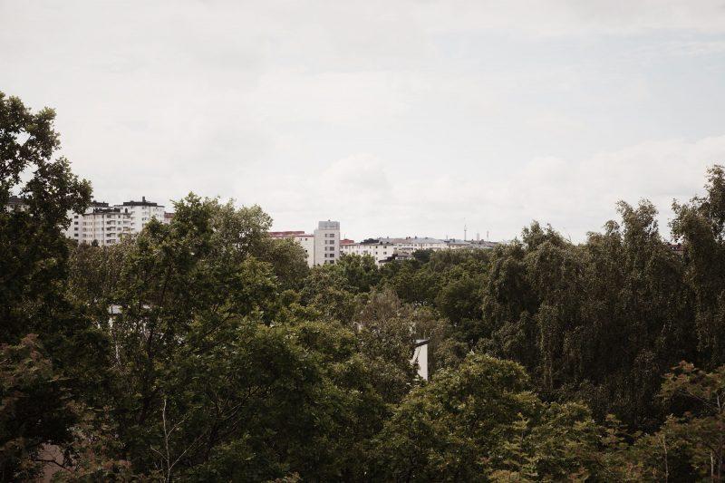 Utsikt över en skog